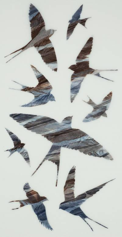 Curved-Wings-Cutting-the-Air